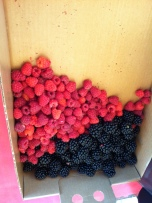 Our hard-won berry haul